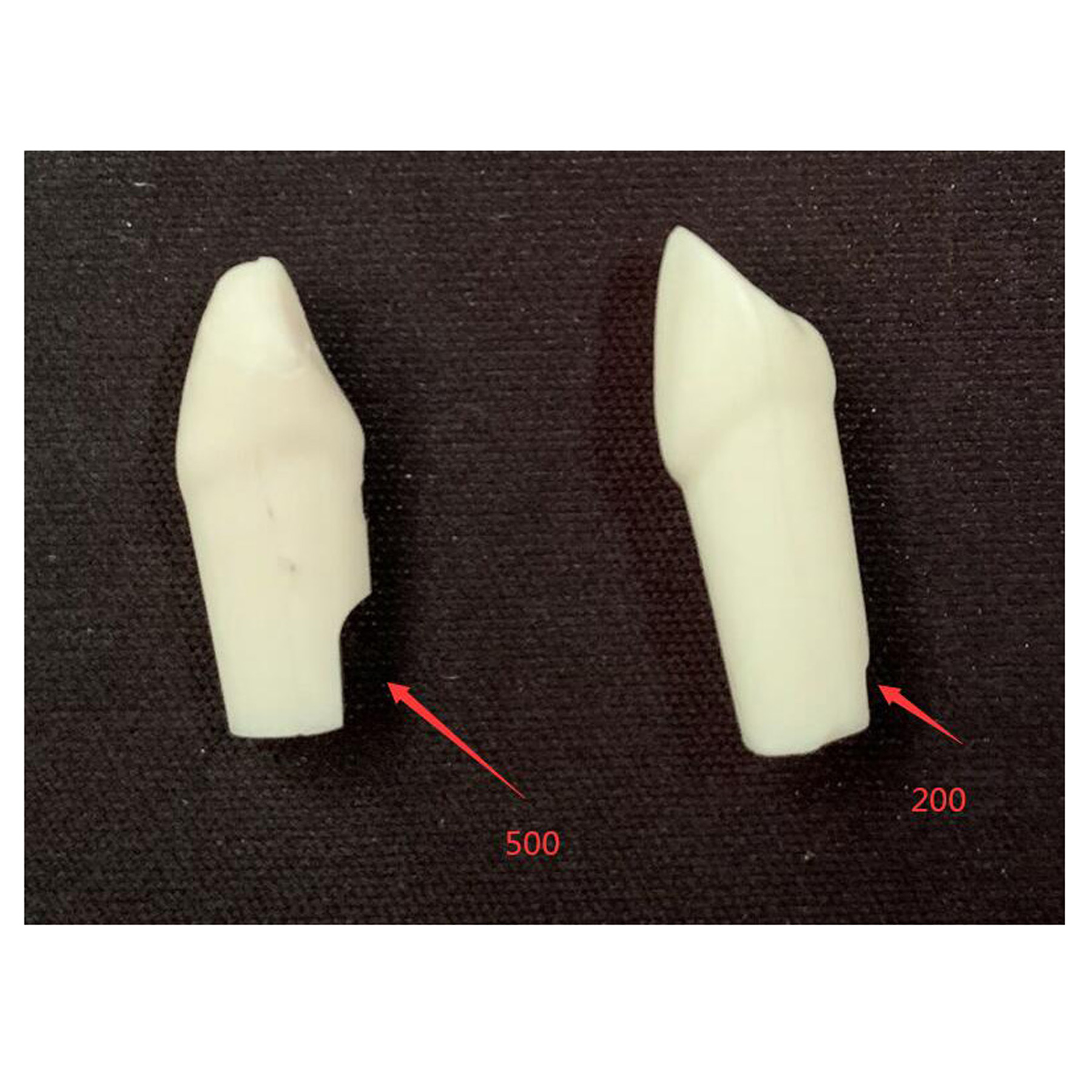 TM-D7 Nissin 200 or Nissin 500 teeth with straight root