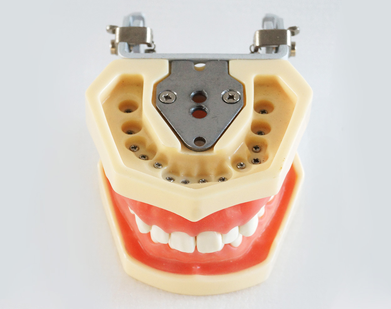 TM-A14 Dental Standard Teeth Model Study And Teach Model Soft Gum With Articulator SCREW FIX