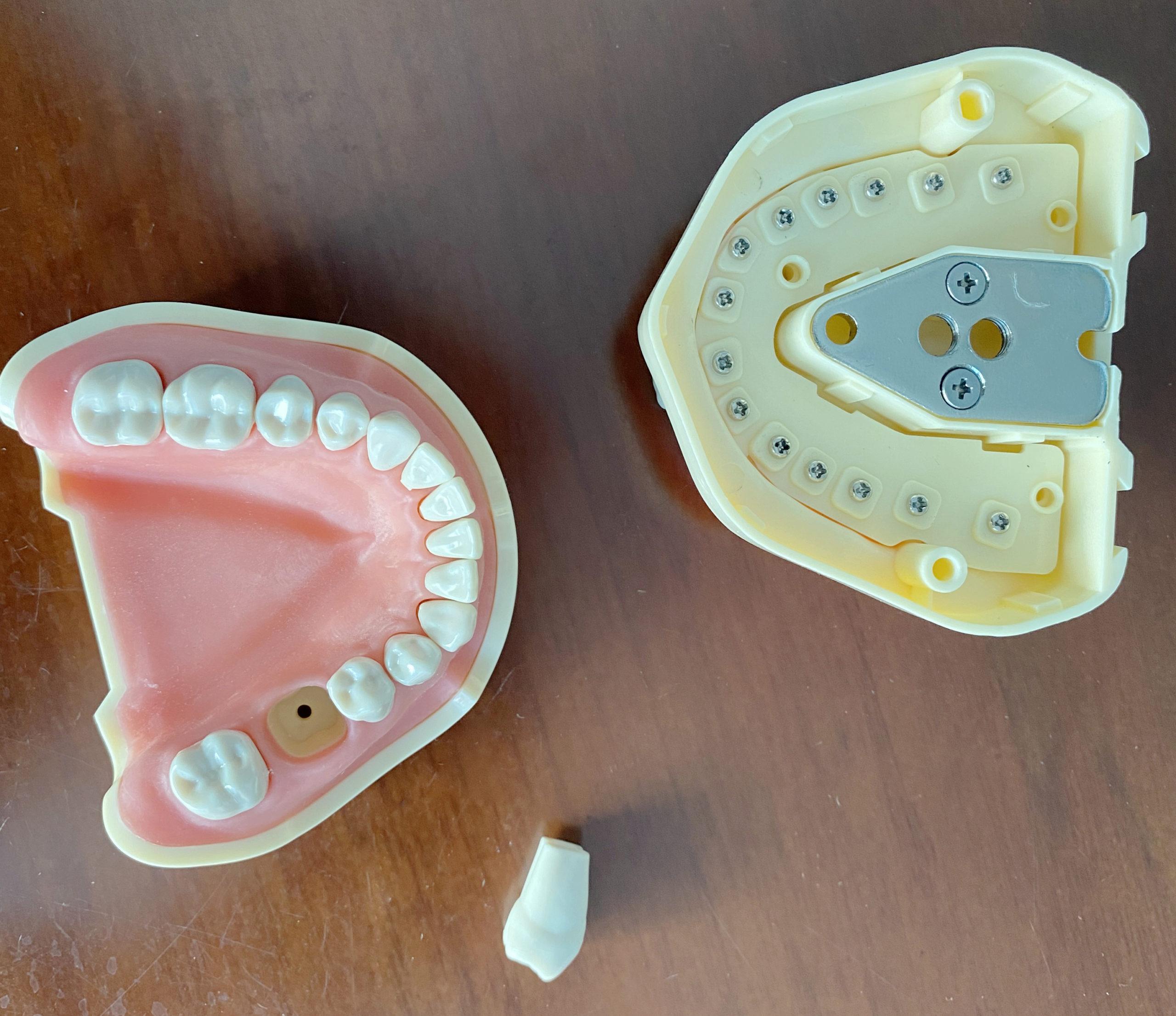Dental Teeth Model Study And Teach Soft Gum BF Style 28pcs