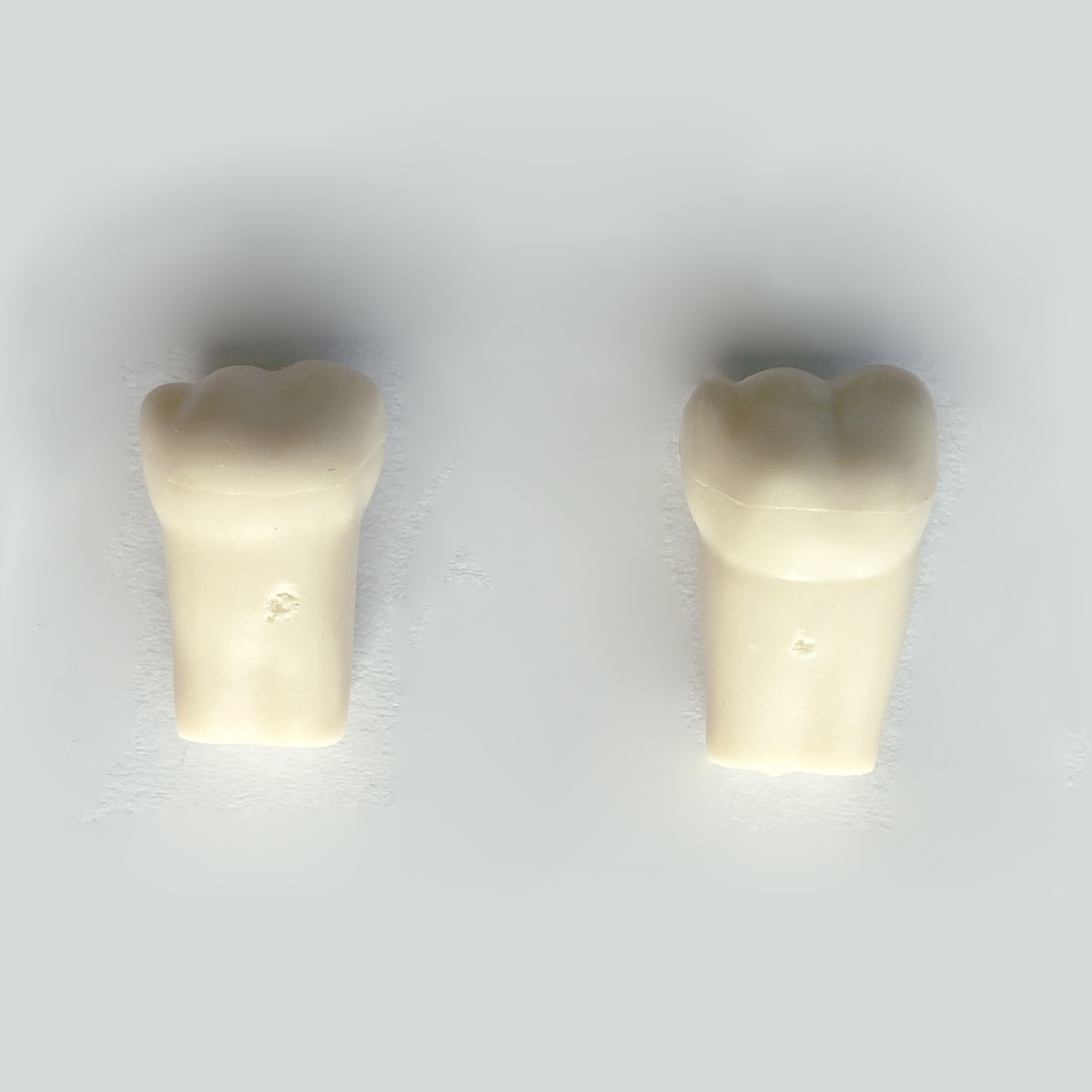 TM-D8 Dental training teeth Permanent teeth For SF Study Model