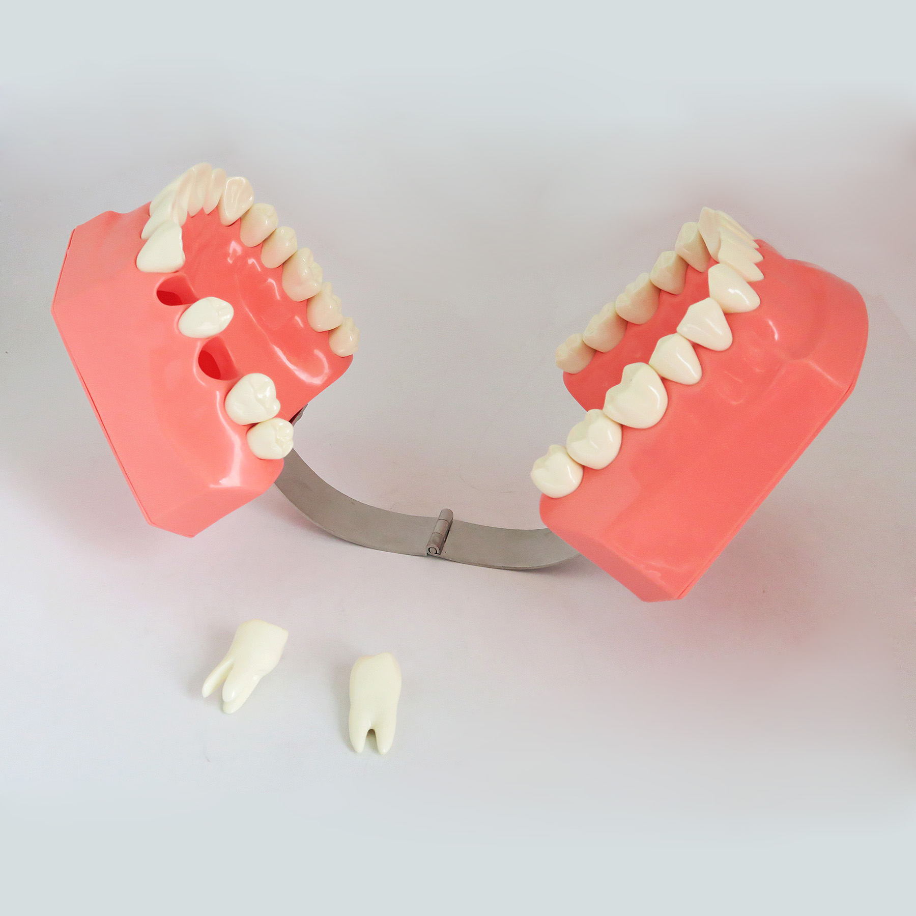 TM-S1 Two Times Tooth-brushing  Model